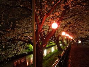 夜桜30.JPG