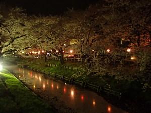 夜桜30A.JPG