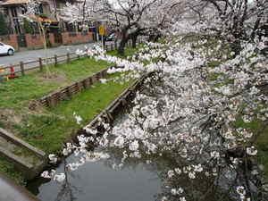 新河岸川2.JPG