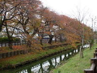 新河岸川紅葉1.JPG