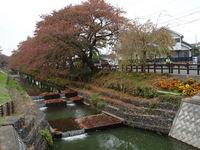新河岸川紅葉2.JPG